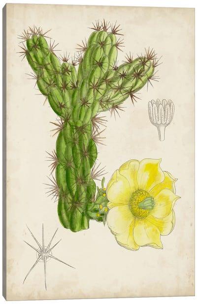 Antique Cactus I Canvas Art Print