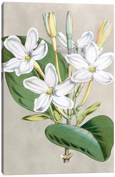 Alabaster Blooms II Canvas Art Print