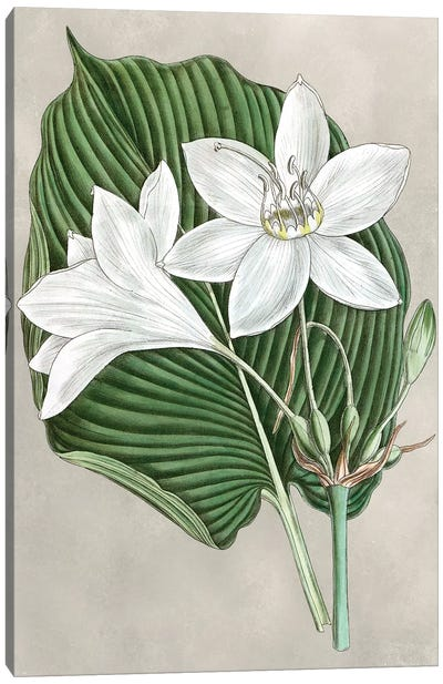 Alabaster Blooms III Canvas Art Print