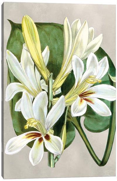 Alabaster Blooms IV Canvas Art Print
