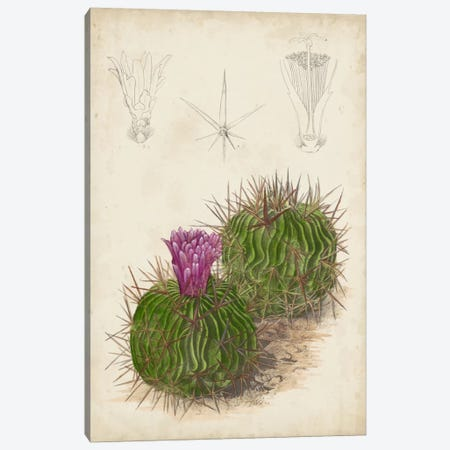Antique Cactus II Canvas Print #CTS2} by Curtis Art Print