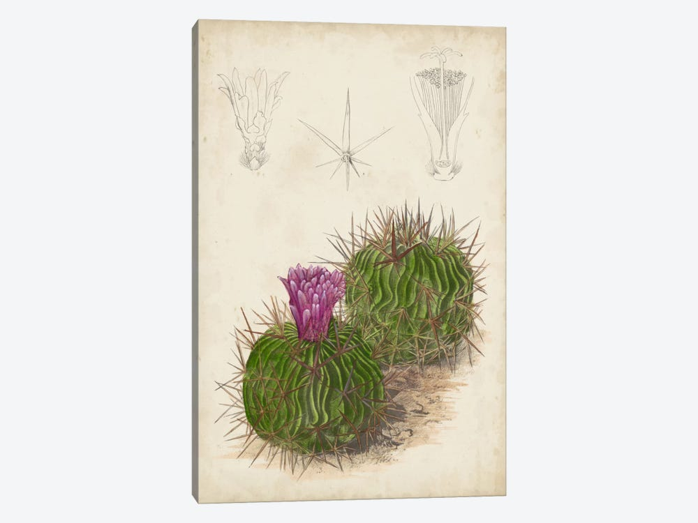 Antique Cactus II by Curtis 1-piece Canvas Wall Art