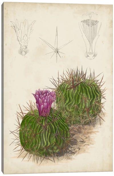 Antique Cactus II Canvas Art Print