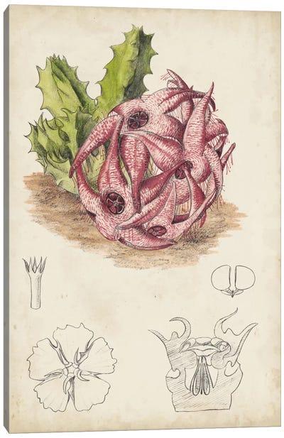 Antique Cactus III Canvas Art Print
