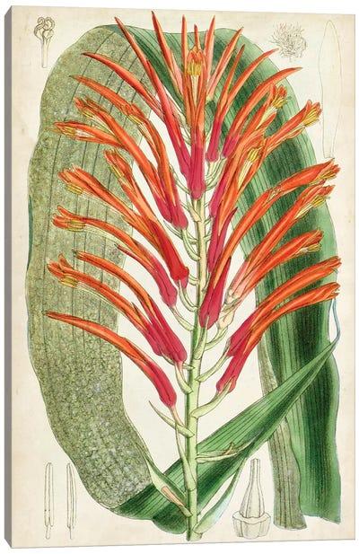 Tropical Gems VI Canvas Art Print