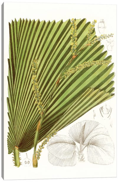 Palm Melange I Canvas Art Print