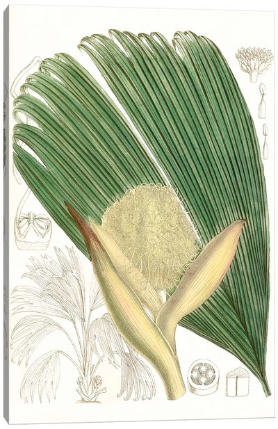 Palm Melange II Canvas Art Print
