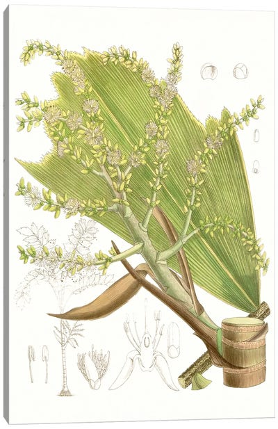 Palm Melange III Canvas Art Print