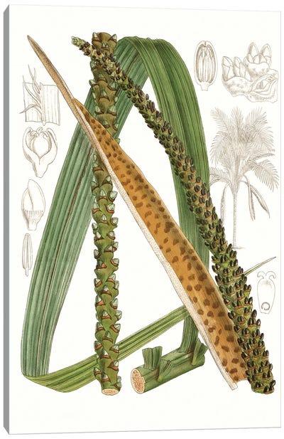 Palm Melange IX Canvas Art Print