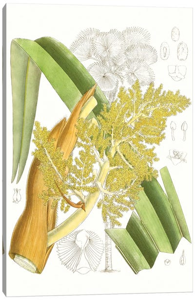 Palm Melange V Canvas Art Print