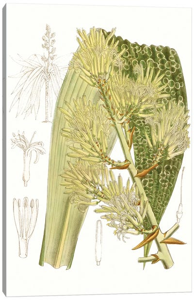 Palm Melange VI Canvas Art Print