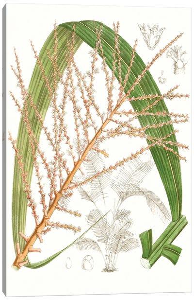 Palm Melange VII Canvas Art Print