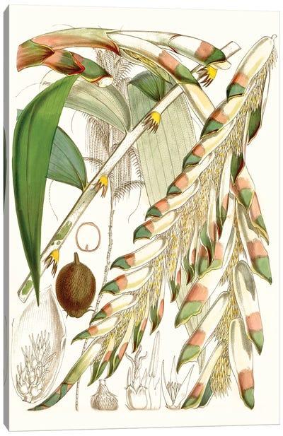 Tropical Variety I Canvas Art Print