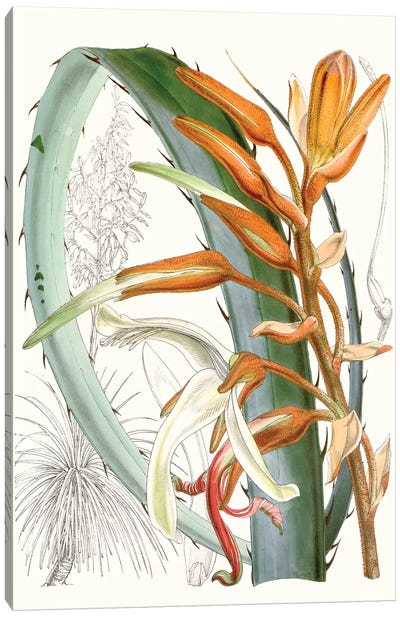Tropical Variety III Canvas Art Print