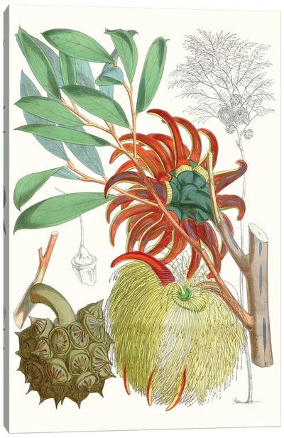 Tropical Variety IV Canvas Art Print