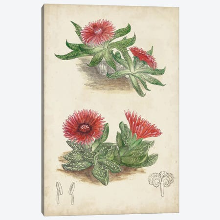 Antique Cactus V Canvas Print #CTS5} by Curtis Canvas Artwork