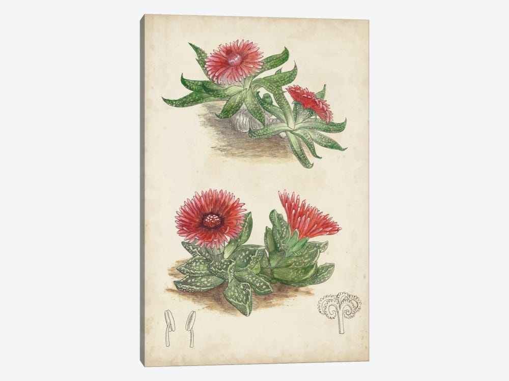 Antique Cactus V by Curtis 1-piece Canvas Art Print
