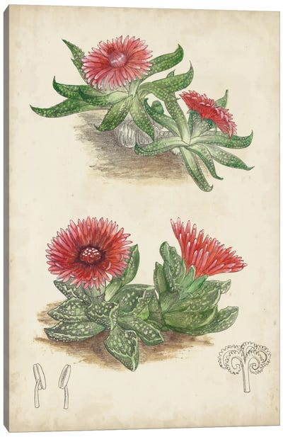 Antique Cactus V Canvas Art Print