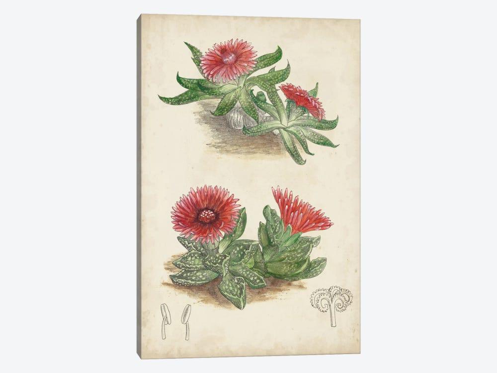 Antique Cactus V by Curtis 1-piece Canvas Art Print