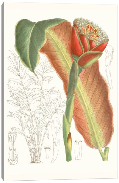 Tropical Variety VII Canvas Art Print