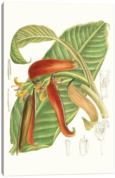 Tropical Variety VIII Canvas Art Print