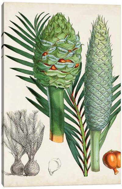Sago Palms I Canvas Art Print