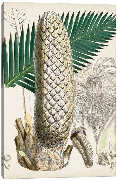 Sago Palms II Canvas Art Print