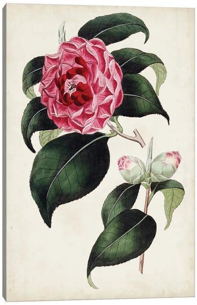Garden Gems II Canvas Art Print