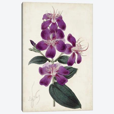 Garden Gems IV Canvas Print #CTS66} by Curtis Art Print