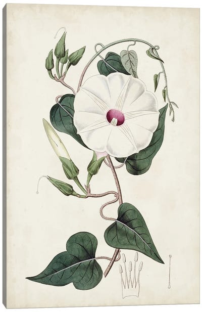 Garden Gems V Canvas Art Print