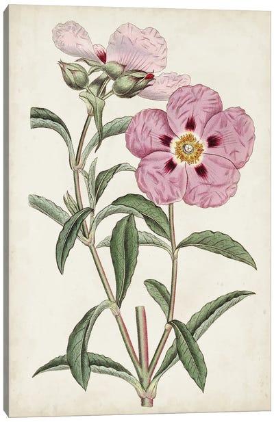 Garden Gems VII Canvas Art Print