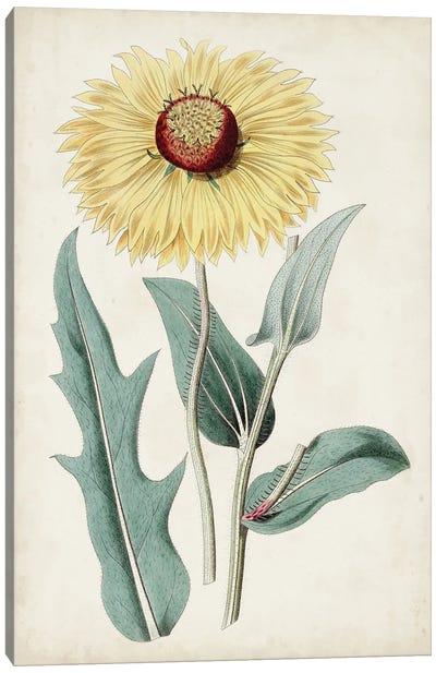 Garden Gems VIII Canvas Art Print