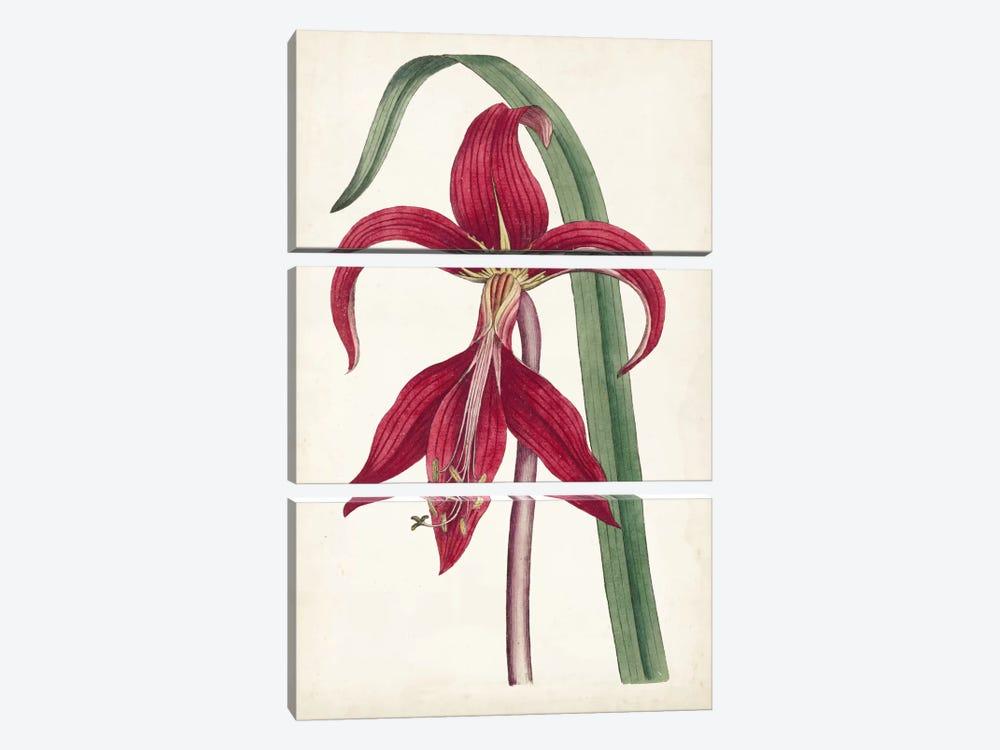 Curtis Garden Beauties I by Curtis 3-piece Canvas Art Print
