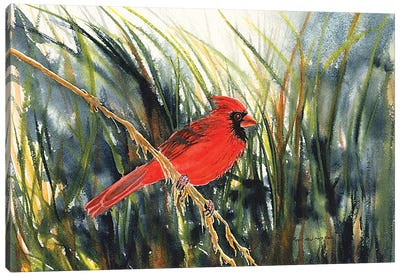 Cardinal Waiting Canvas Art Print