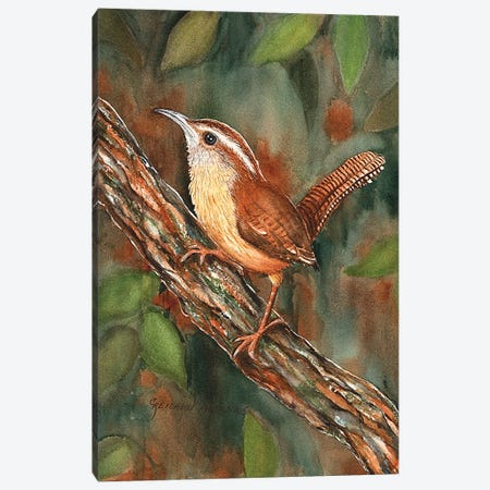 Carolina Wren Canvas Print #CTW11} by Christine Reichow Canvas Art Print