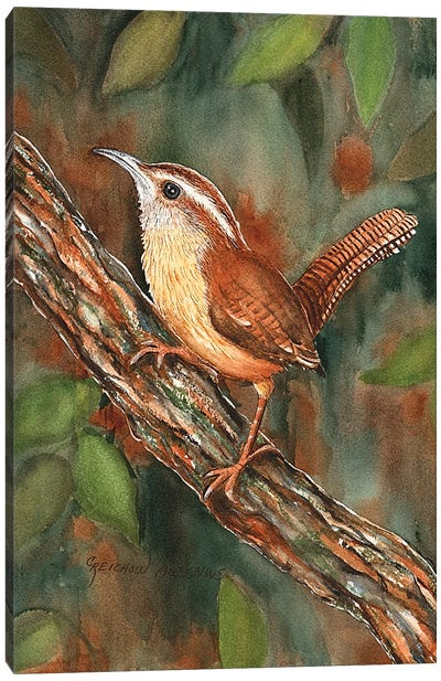 Carolina Wren Canvas Art Print