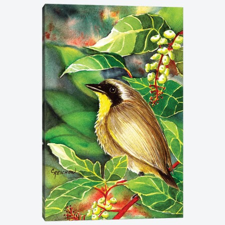 Common Yellow Throat Canvas Print #CTW13} by Christine Reichow Canvas Print