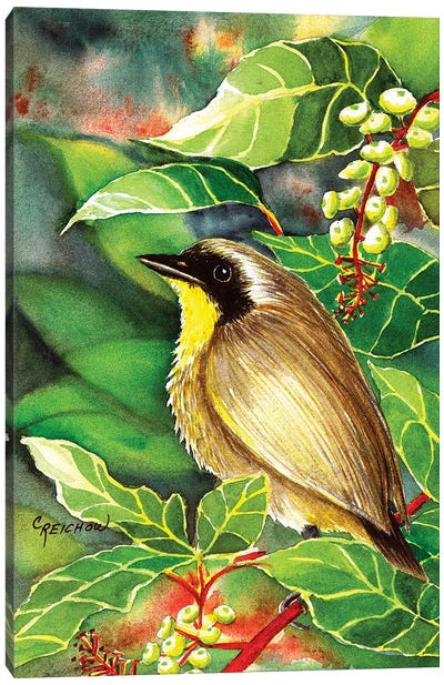 Common Yellow Throat Canvas Art Print