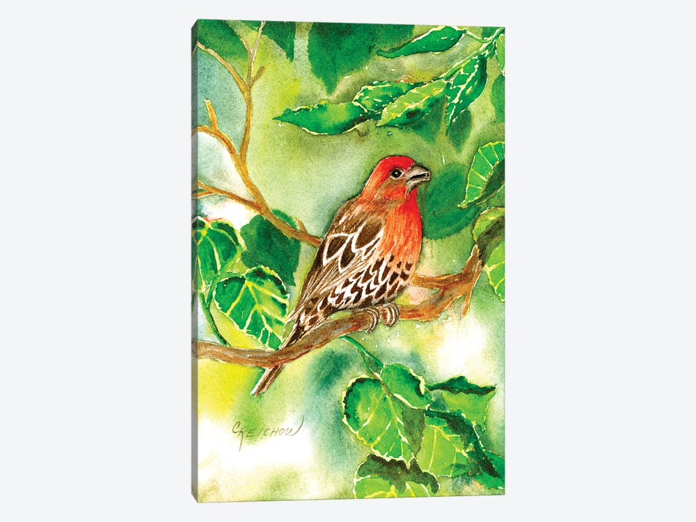 House Finch by Christine Reichow 1-piece Canvas Wall Art