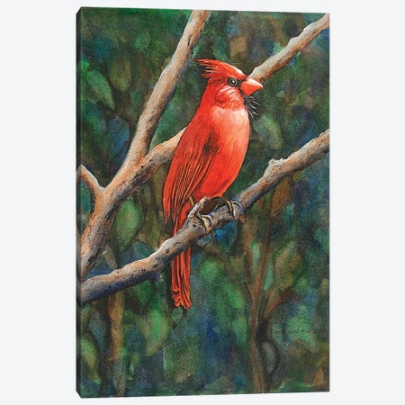 Mr Cardinal Canvas Print #CTW37} by Christine Reichow Canvas Artwork
