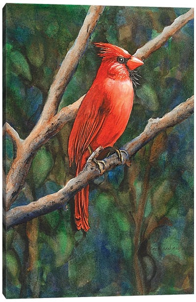 Mr Cardinal Canvas Art Print