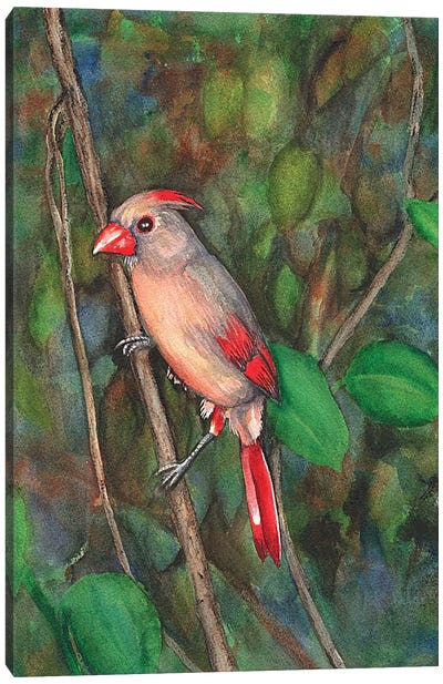 Mrs Cardinal Canvas Art Print
