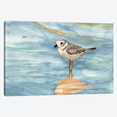 Piping Plover Canvas Print #CTW46} by Christine Reichow Canvas Art Print