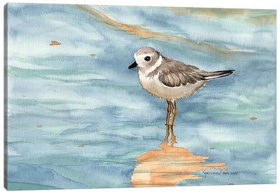 Piping Plover Canvas Art Print