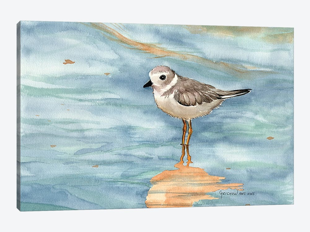 Piping Plover by Christine Reichow 1-piece Canvas Art Print