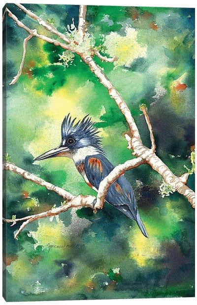Quizzical Kingfisher Canvas Art Print