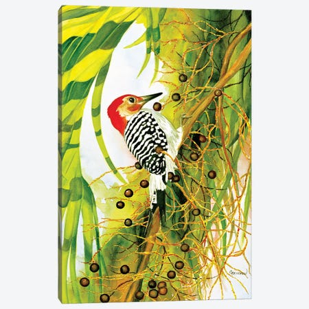 Red Bellied Woodpecker Canvas Print #CTW50} by Christine Reichow Art Print