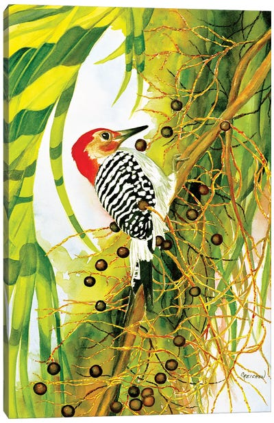 Red Bellied Woodpecker Canvas Art Print