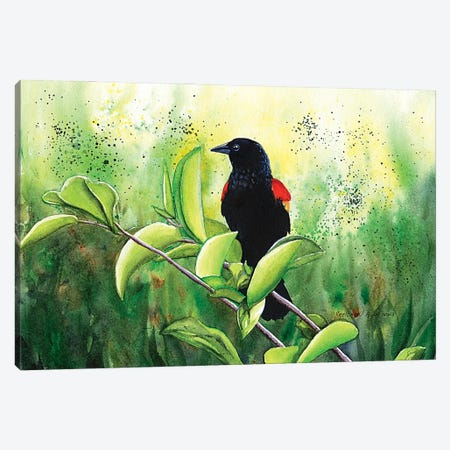 Red Winged Blackbird Canvas Print #CTW51} by Christine Reichow Canvas Art Print