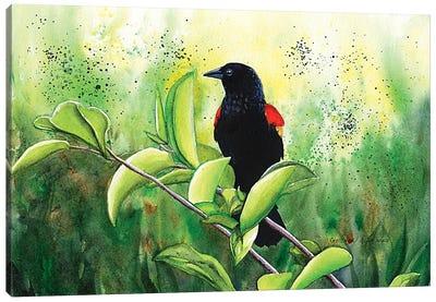 Red Winged Blackbird Canvas Art Print